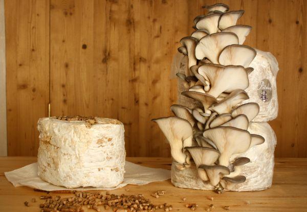 Für Pilz-Substrat: Eichen-Pellets: 960 kg inkl. Versand